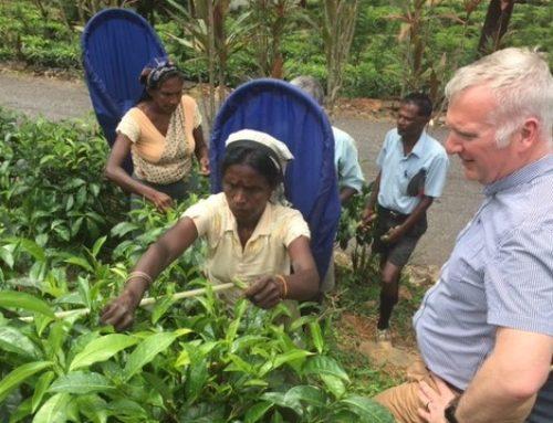 Guy Hilton FIH shares his experience of visiting Hope & Glory's tea gardens in Sri Lanka